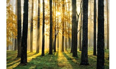 PAPERMOON Fototapete »Sunny Forest«, Vlies, in verschiedenen Größen kaufen