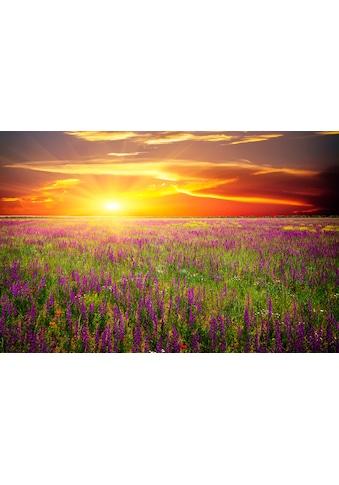 Papermoon Fototapete »Blumenwiese Sonnenuntergang«, Vliestapete, hochwertiger... kaufen