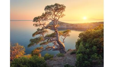 Papermoon Fototapete »Tree Mountain Sunset« kaufen