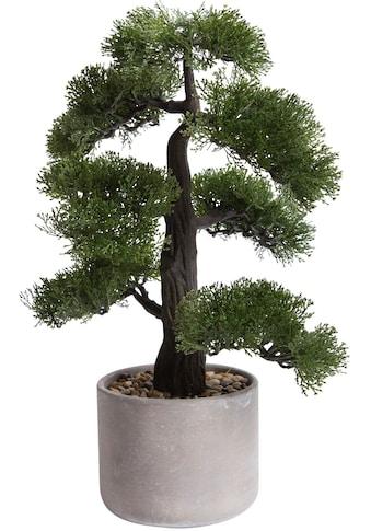 Botanic-Haus Kunstbonsai »Ceder Bonsai« kaufen