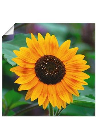 Artland Wandbild »Sonnenblume« kaufen