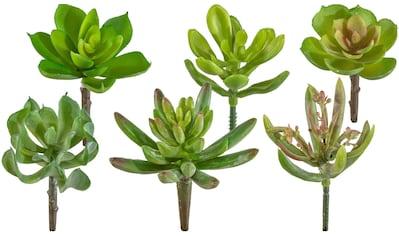 Creativ green Kunstpflanze »Sukkulenten«, 12er Set kaufen