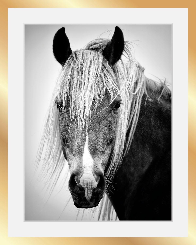 Bild Pferdekopf, schwarz