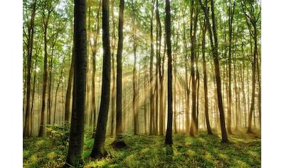 Papermoon Fototapete »Forest« kaufen
