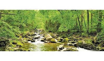 Home affaire Glasbild »tupikov: Herbstwald, Fluß Smolny«, 125/50 cm kaufen