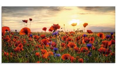 Artland Glasbild »Mohnblumenwiese«, Blumen, (1 St.) kaufen