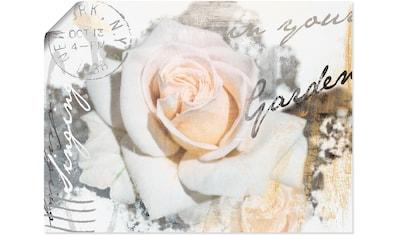 Artland Wandbild »In Buchstaben - Rose«, Blumen, (1 St.), in vielen Größen & Produktarten - Alubild / Outdoorbild für den Außenbereich, Leinwandbild, Poster, Wandaufkleber / Wandtattoo auch für Badezimmer geeignet kaufen