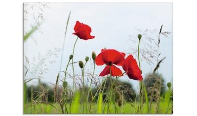 Artland Glasbild »Mohnblumen«, Blumen, (1 St.) kaufen