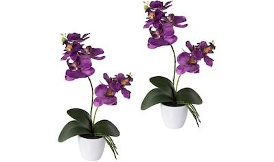 Creativ green Kunstorchidee »Phalaenopsis«, 2er Set, im Kunststofftopf kaufen