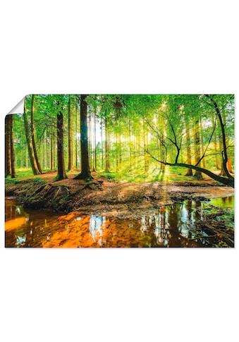 Artland Wandbild »Wald mit Bach« kaufen