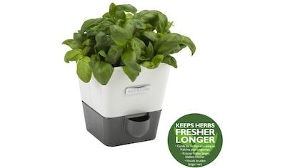 Cole & Mason Kräutertopf, Kunststoff, mit Bewässerungssystem kaufen