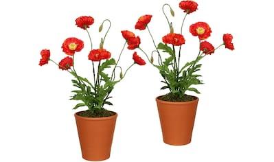 Creativ green Künstliche Zimmerpflanze, im Tontopf (2er Set) kaufen