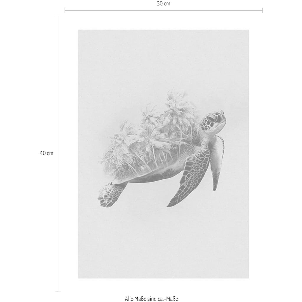Komar Poster »Animals Paradise Turtle«, Tiere, Höhe: 50cm