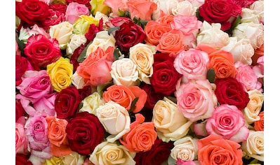 Papermoon Fototapete »Roses« kaufen