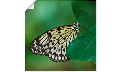 Artland Wandbild »weisse Baumnymphe«, Insekten, (1 St.), in vielen Größen &... kaufen
