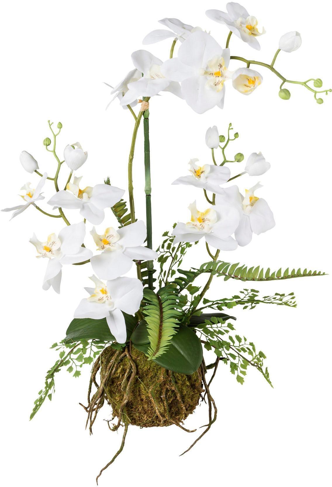 Creativ green Kunstorchidee | Dekoration > Dekopflanzen | Creativ Green
