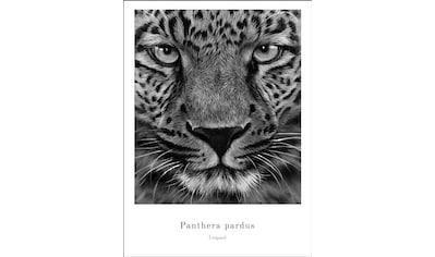 Spiegelprofi GmbH Bild »Panther«, mit Rahmen kaufen