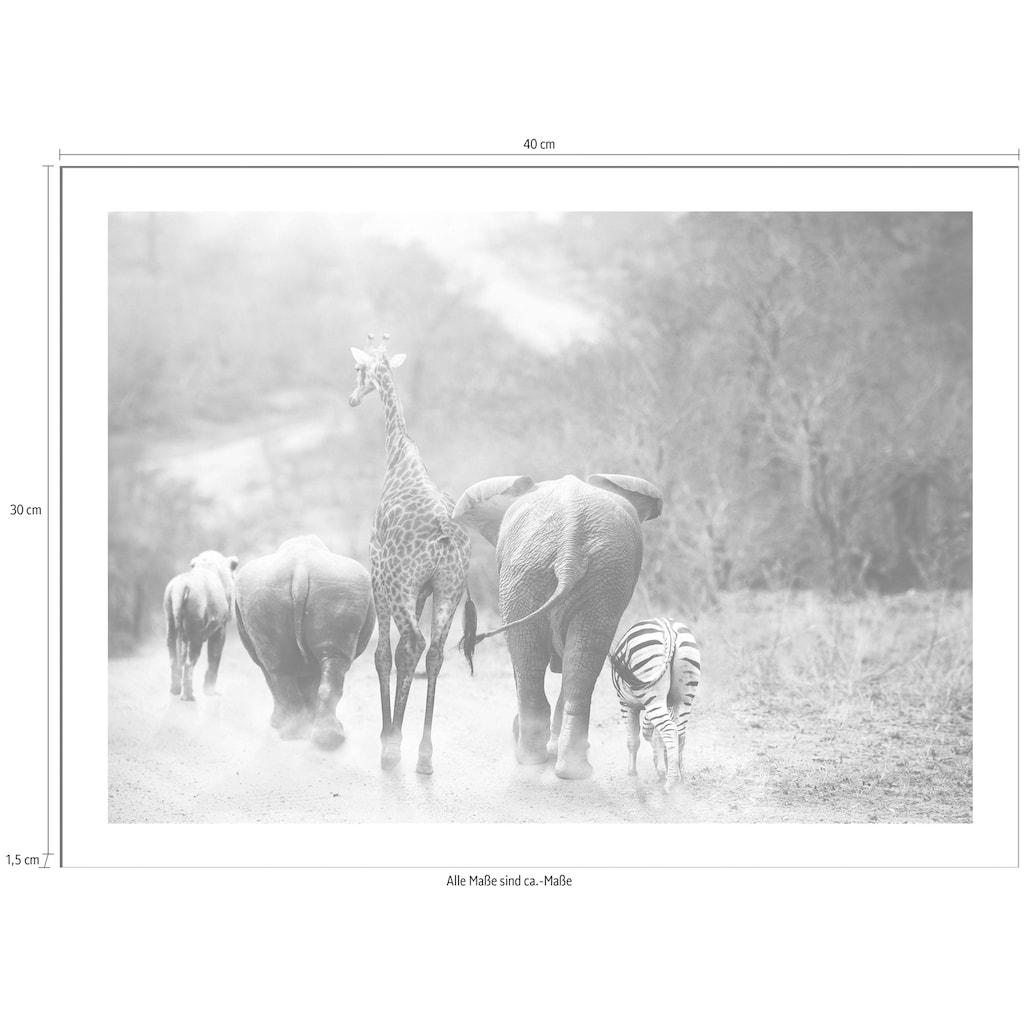 Spiegelprofi GmbH Bild »Safari«, mit Rahmen