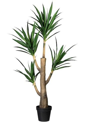 Creativ green Künstliche Zimmerpflanze »Dracaena fragans« (1 Stück) kaufen
