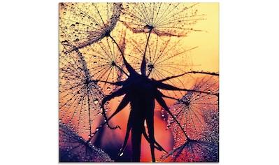 Artland Glasbild »Pusteblume im Sonnenuntergang«, Blumen, (1 St.) kaufen