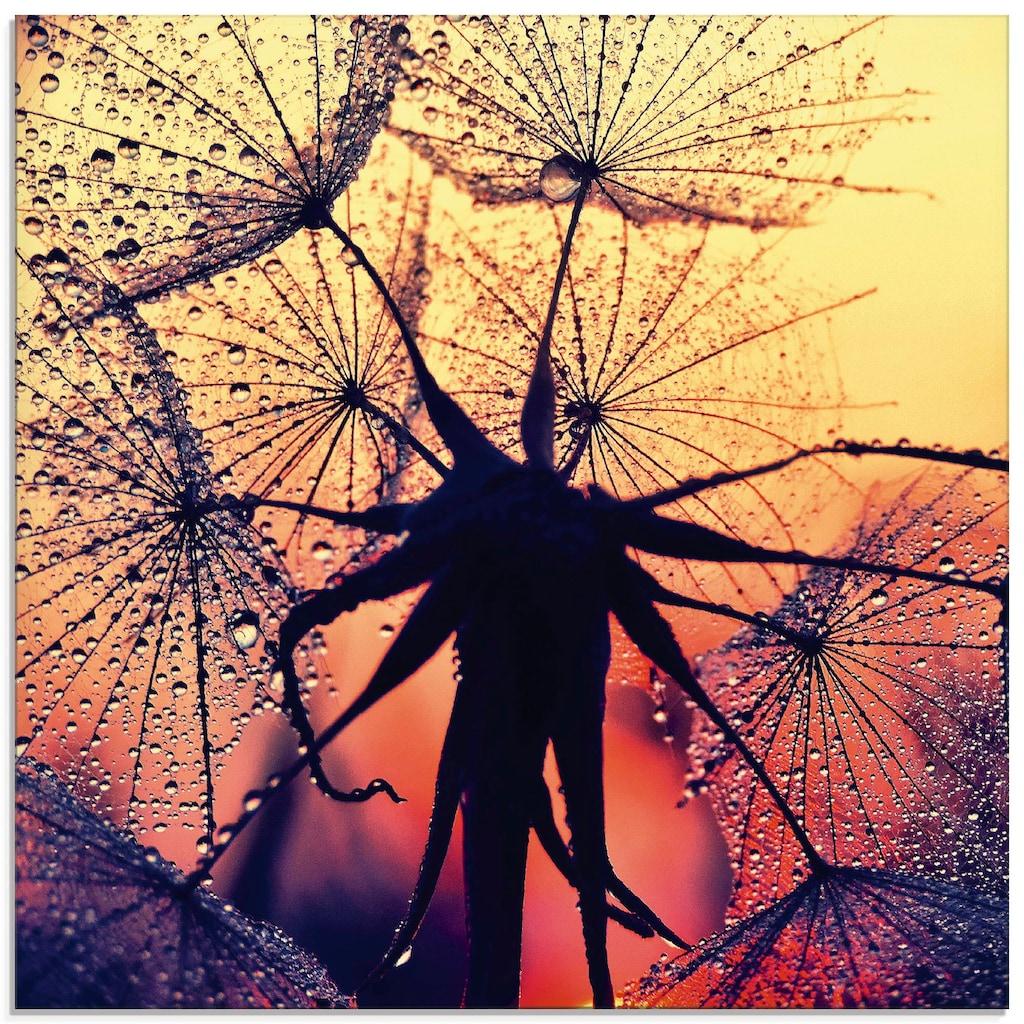 Artland Glasbild »Pusteblume im Sonnenuntergang«, Blumen, (1 St.)