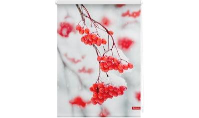 LICHTBLICK Seitenzugrollo »Rollo Klemmfix, ohne Bohren, Verdunkelung, Vogelbeeren - Rot Weiß«, verdunkelnd, Verdunkelung, freihängend kaufen