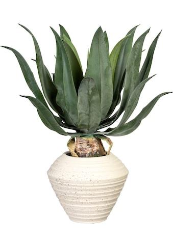 Creativ green Künstliche Zimmerpflanze »Agave americana« (1 Stück) kaufen