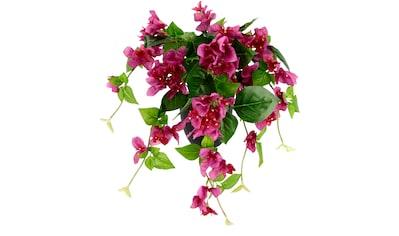 I.GE.A. Kunstpflanze »Bougainvillea«, im Kunststofftopf kaufen