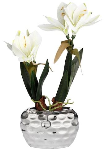 my home Kunstblume »Amaryllis«, Fest verankert im Keramiktopf kaufen