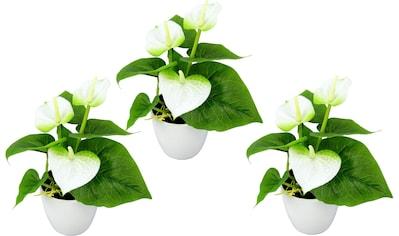 I.GE.A. Kunstpflanze »Mini Anthurie« kaufen