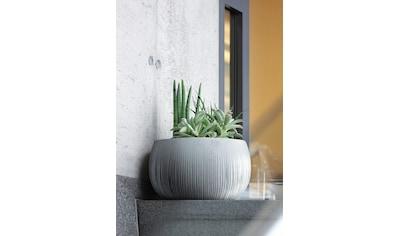 Prosperplast Blumentopf »Beton Bowl«, (1 St.), Ø48cm x 30cm kaufen
