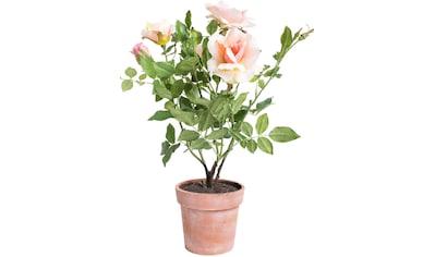 Botanic-Haus Kunstblume »Rosenstock« kaufen