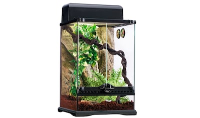 Terrarium - Set »Rainforest« kaufen
