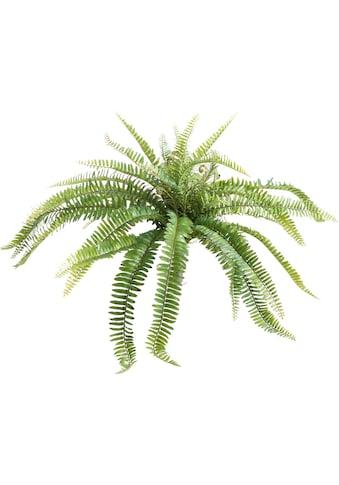 Botanic-Haus Künstliche Zimmerpflanze »Farnbusch« kaufen