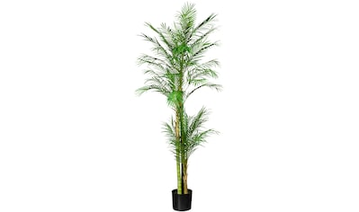 Creativ green Kunstpalme »Arecapalme« kaufen