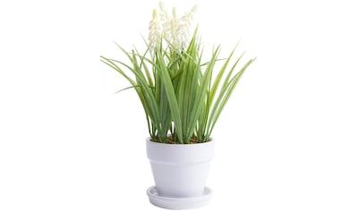 Botanic-Haus Kunstblume »Muskari getopft« kaufen