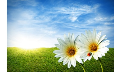 Papermoon Fototapete »Spring Daisies« kaufen
