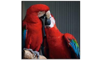 Artland Glasbild »Papageien«, Vögel, (1 St.) kaufen