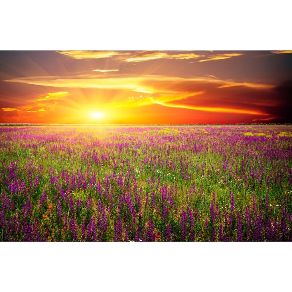 Papermoon Fototapete »Blumenwiese Sonnenuntergang«, Vliestapete, hochwertiger Digitaldruck