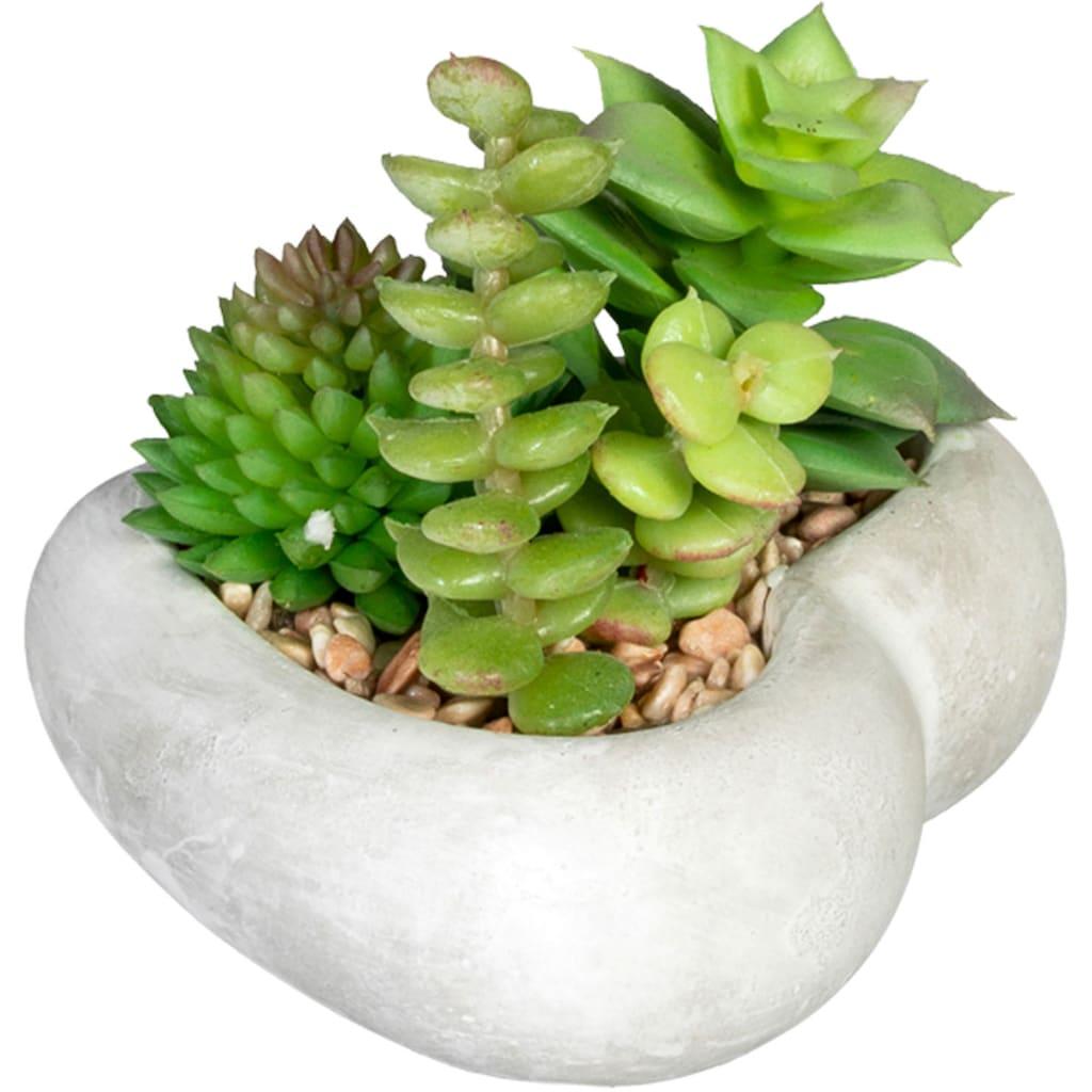 Creativ green Künstliche Zimmerpflanze »Sukkulentenarrangement«, in Zementschale, 3er Set