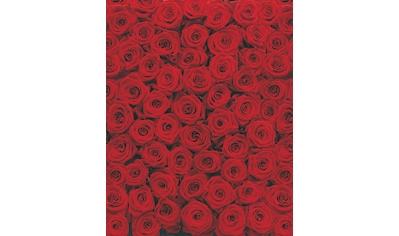 Komar Fototapete »Roses«, bedruckt-floral-geblümt, ausgezeichnet lichtbeständig kaufen