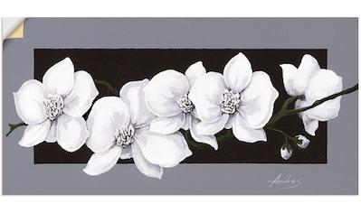 Artland Wandbild »Weiße Orchideen auf grau«, Blumen, (1 St.), in vielen Größen &... kaufen