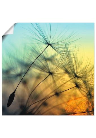 Artland Wandbild »Goldener Sonnenuntergang und Pusteblumen«, Blumen, (1 St.), in... kaufen