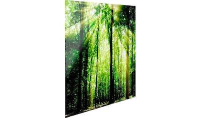 Reinders! Glasbild »Grünes Licht« kaufen