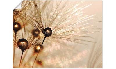Artland Wandbild »Pusteblume Goldener Tropfen« kaufen