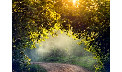 Papermoon Fototapete »Misty Forest in Spring« kaufen