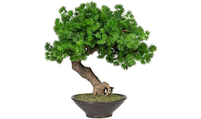Home affaire Kunstbonsai »Perham« kaufen
