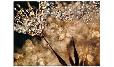 Artland Glasbild »Pusteblume Goldschimmer« kaufen