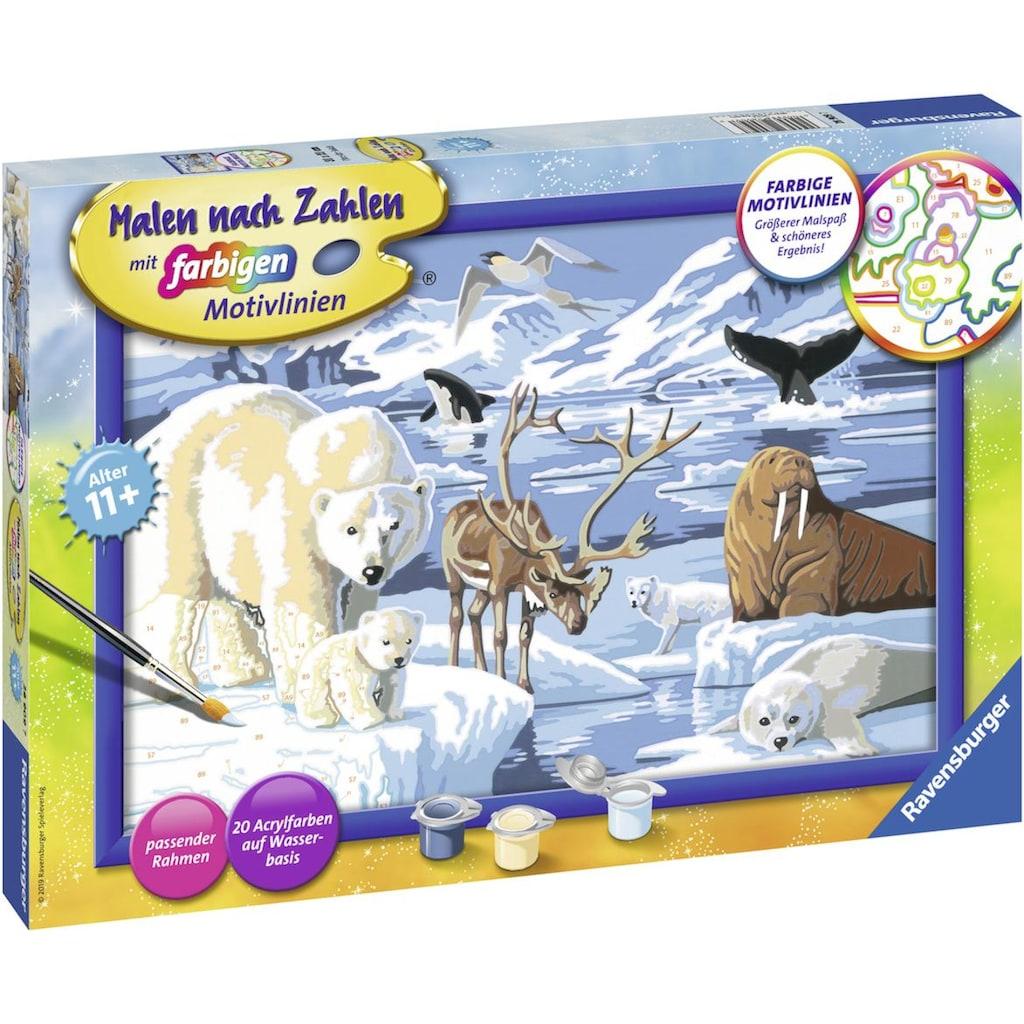 Ravensburger Malen nach Zahlen »Tiere der Arktis«, Made in Europe, FSC® - schützt Wald - weltweit