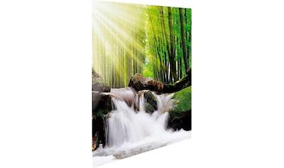 Reinders! Glasbild »Feng Shui Wald« kaufen